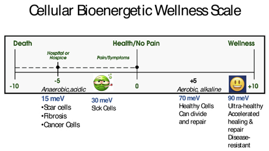 Cellular Bioenergetice Wellness Scale